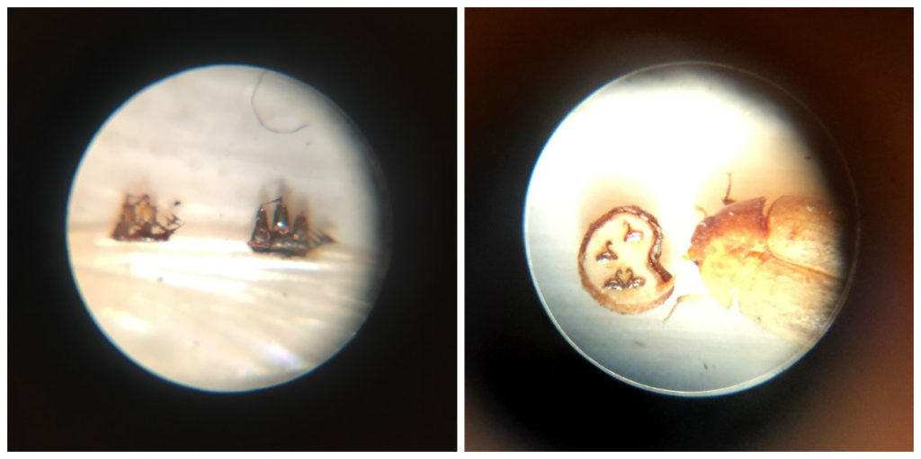 Left: Boats on a mosquito's wing. Right: Swan lake, on a poppy seed cut in half.
